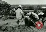 Image of rice cultivation Philippines, 1915, second 3 stock footage video 65675078023