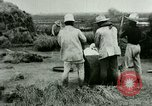 Image of rice cultivation Philippines, 1915, second 6 stock footage video 65675078023