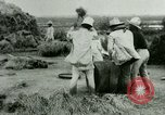 Image of rice cultivation Philippines, 1915, second 8 stock footage video 65675078023