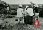 Image of rice cultivation Philippines, 1915, second 9 stock footage video 65675078023