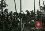 Image of coconut cultivation Philippines, 1915, second 2 stock footage video 65675078024