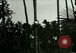 Image of coconut cultivation Philippines, 1915, second 3 stock footage video 65675078024