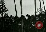 Image of coconut cultivation Philippines, 1915, second 4 stock footage video 65675078024