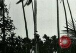 Image of coconut cultivation Philippines, 1915, second 6 stock footage video 65675078024