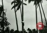 Image of coconut cultivation Philippines, 1915, second 12 stock footage video 65675078024
