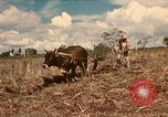 Image of family system Philippines, 1971, second 1 stock footage video 65675078052