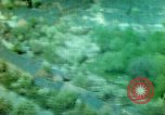Image of strafing run Germany, 1945, second 11 stock footage video 65675078108
